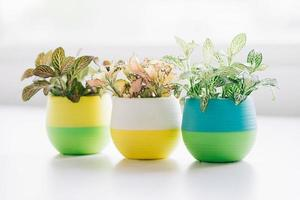 Small pots of plants placed on the table to decorate the house photo