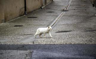 Abandoned street cats photo