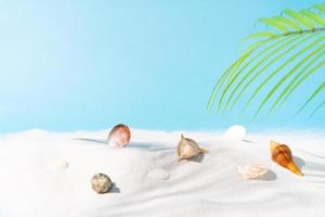 Summer background with sand seashell and palm tree photo