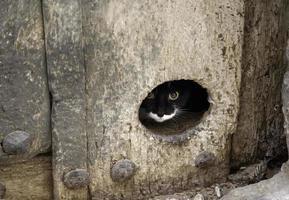 gato escondido puerta foto