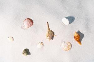 Las conchas marinas se muestran en la arena, fondo de verano foto