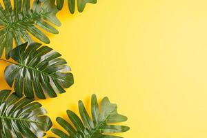 hojas tropicales sobre un fondo amarillo, fondo de verano foto