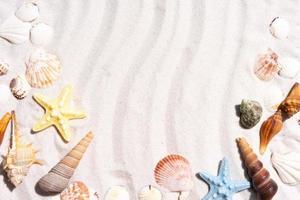 Fondo de verano con conchas marinas y caracolas en la arena. foto