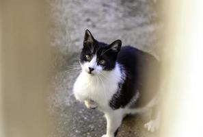 gato detrás de la puerta de madera foto