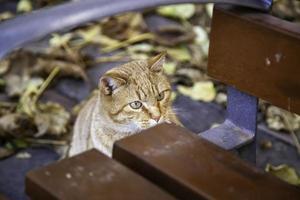 Orange cat resting street photo