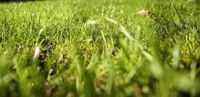 césped de hierba mojada foto