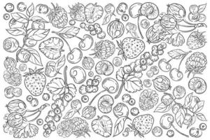 conjunto de bayas dibujadas a mano vector