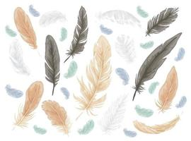 Feather bird isolated vector set