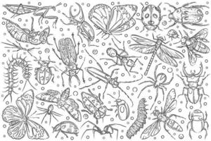 Hand drawn insects ant and butterfly vector