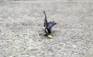 alimentando a un pájaro en libertad foto