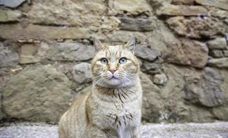 Orange tabby street cat photo