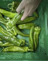 Pimientos verdes españoles en un mercado foto