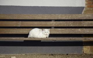 Cat lying on bench photo