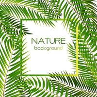 Palm Tree Leaf Silhouette Background vector