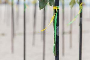 green and yellow ribbon in the color of the Brazilian flag, decorating a piece of wood on Copacabana Beach in Rio de Janeiro. photo