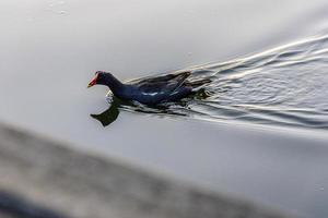 aves brasileñas al aire libre foto