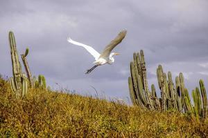 Brazilian birds outdoors photo
