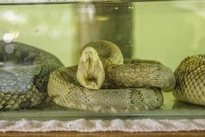 brazilian outdoor snakes photo