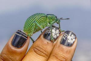 Brazilian insects outdoors photo