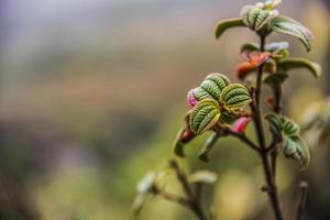 flowers of brazilian altitude photo