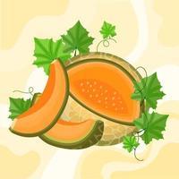 melon fruit illustration vector
