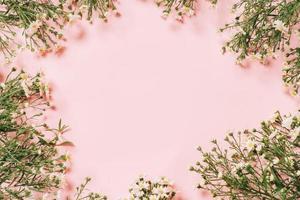 crisantemos dispuestos sobre un fondo rosa foto