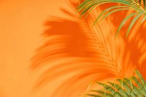 las ramas de palmera proyectan sombras en la pared naranja foto
