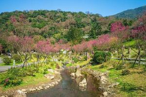 Scenery of Yangmingshan National Park in Taipei with cherry blossom, Taiwan photo