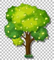 Pear tree isolated vector