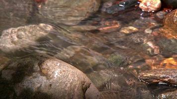 libellule atterrissant sur un rocher au bord de la rivière video
