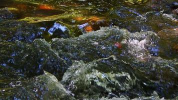 cachoeira no rio na natureza selvagem video