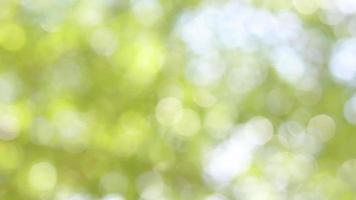 hojas borrosas en árbol con bokeh video