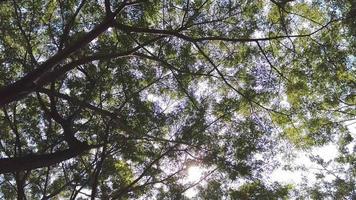 congé vert à travers la lumière du soleil video