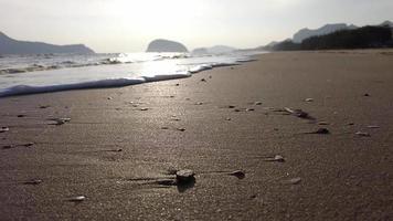 plage de sable au lever du soleil video