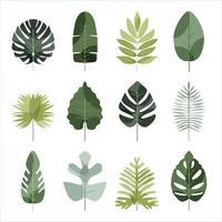 conjunto de vectores de iconos de hojas tropicales