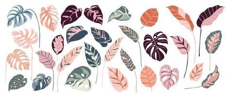 Tropical leaves vector set. Palm leaf, coconut leaf, banana leaves, monstera, fern, Botanical and Jungle leaves design for nature background, Eco and summer banner, wallpaper, pattern and prints.