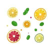 Vector set of citrus fruit slices