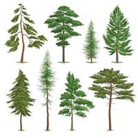 Realistic Pine Trees Set Vector Illustration