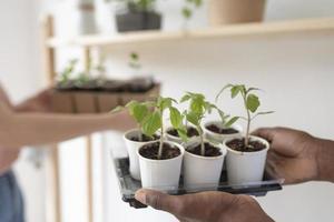 amigos que tienen un jardín sostenible en el interior foto