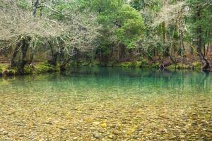 río de montaña en el bosque foto
