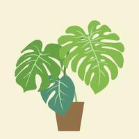 monstera deliciosa, la planta de queso suizo, una popular planta decorativa de la casa nativa de la selva tropical. vector