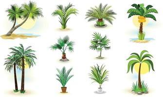 Palm Tree Icons Vector Illustrator