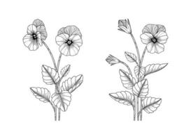 Hand drawn pansy floral illustration. vector
