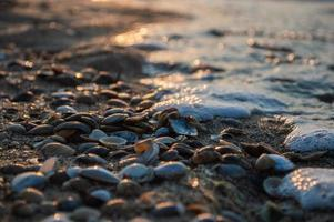 Seashells closeup on the shore of sea with blur during sunset photo