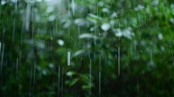 Rain and rain drops Backdrop with green forest, rainy concept photo