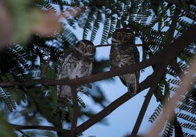 Baby Owl sitting on tree photo
