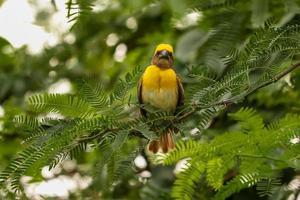 Bird sitting on the tree photo