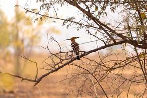 Woodpecker sitting on tree photo