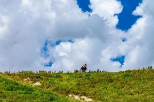 caballo en la cima de una colina. dargaville, nueva zelanda foto