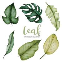 Many kinds of beautiful green leaf in water color style vector